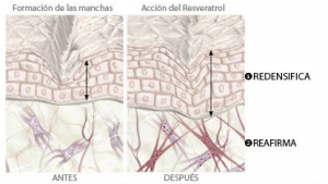 caudalie-accion-resveratrol-farmaconfianza